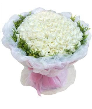 99枝白玫瑰,外围黄莺