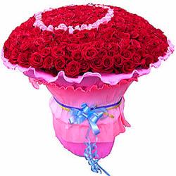 520枝红玫瑰(包括22枝粉色玫瑰心型居中)。