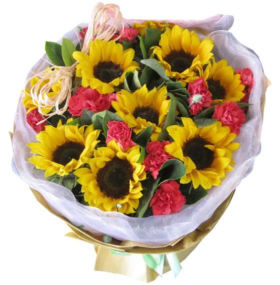 8朵向日葵、9朵粉色康乃馨绿叶陪衬