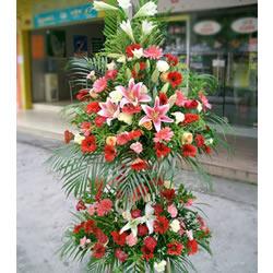 太阳花,玫瑰,百合,康乃馨,衬花、绿叶点缀