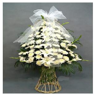 白菊50枝,6朵白色百合,绿叶