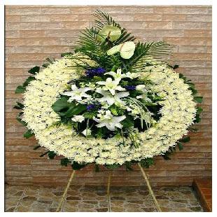 白菊200朵、白百合5朵,白玫瑰5朵,龟背,散尾,金鱼草等衬叶。