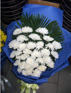 29枝白菊,绿叶搭配,