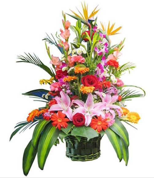 红玫瑰、粉百合、橘色太阳花、红色太阳花、红色和粉色康乃馨、天堂鸟、洋兰、散尾葵、巴西木叶、绿叶间插